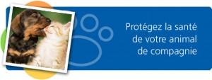 Assurance-Animaux-Hbc